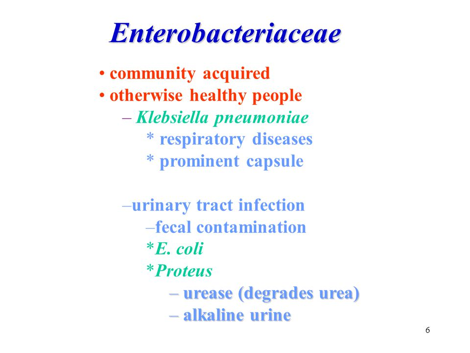 6 community acquired otherwise healthy people – Klebsiella pneumoniae * respiratory diseases * prominent capsule –urinary tract infection –fecal conta