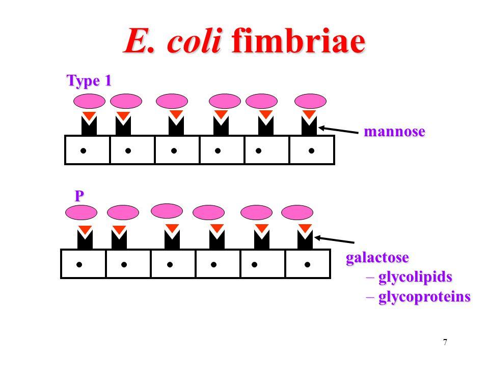 8 Enterobacteriaceae gram negative facultative anaerobic rodsgram negative facultative anaerobic rods – oxidase negative (no cytochrome oxidase)
