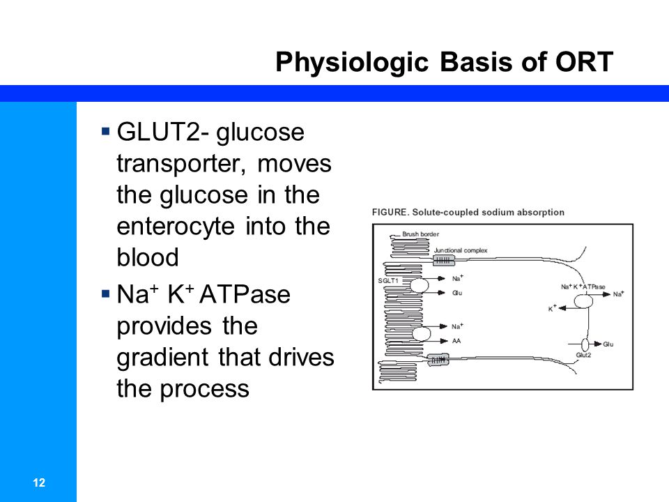 13 Physiologic Basis of ORT
