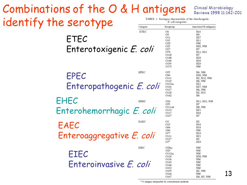 13 Combinations of the O & H antigens identify the serotype Clinical Microbiology Reviews 1998 11:142-201 ETEC Enterotoxigenic E.