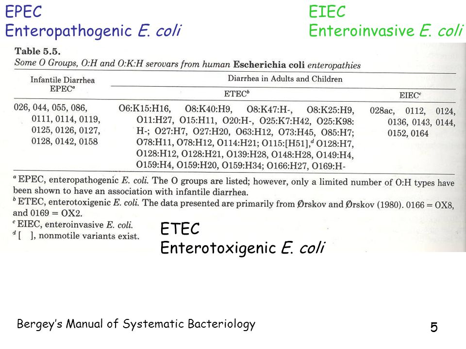 5 EPEC Enteropathogenic E. coli ETEC Enterotoxigenic E.