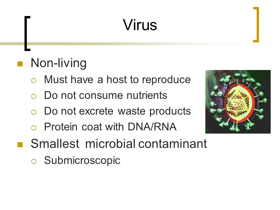 Virus Non-living  Must have a host to reproduce  Do not consume nutrients  Do not excrete waste products  Protein coat with DNA/RNA Smallest micro