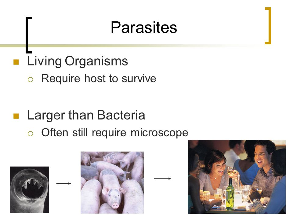 Parasites Living Organisms  Require host to survive Larger than Bacteria  Often still require microscope