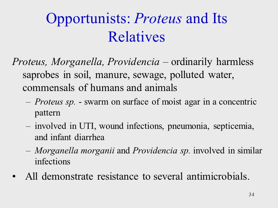 34 Opportunists: Proteus and Its Relatives Proteus, Morganella, Providencia – ordinarily harmless saprobes in soil, manure, sewage, polluted water, co