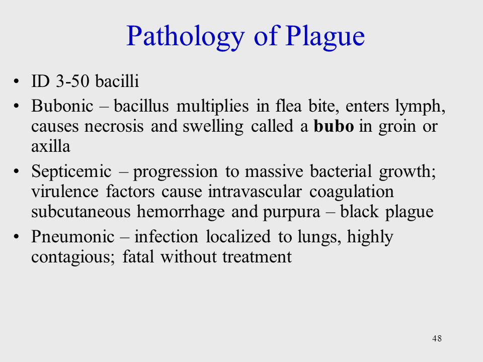 48 Pathology of Plague ID 3-50 bacilli Bubonic – bacillus multiplies in flea bite, enters lymph, causes necrosis and swelling called a bubo in groin or axilla Septicemic – progression to massive bacterial growth; virulence factors cause intravascular coagulation subcutaneous hemorrhage and purpura – black plague Pneumonic – infection localized to lungs, highly contagious; fatal without treatment