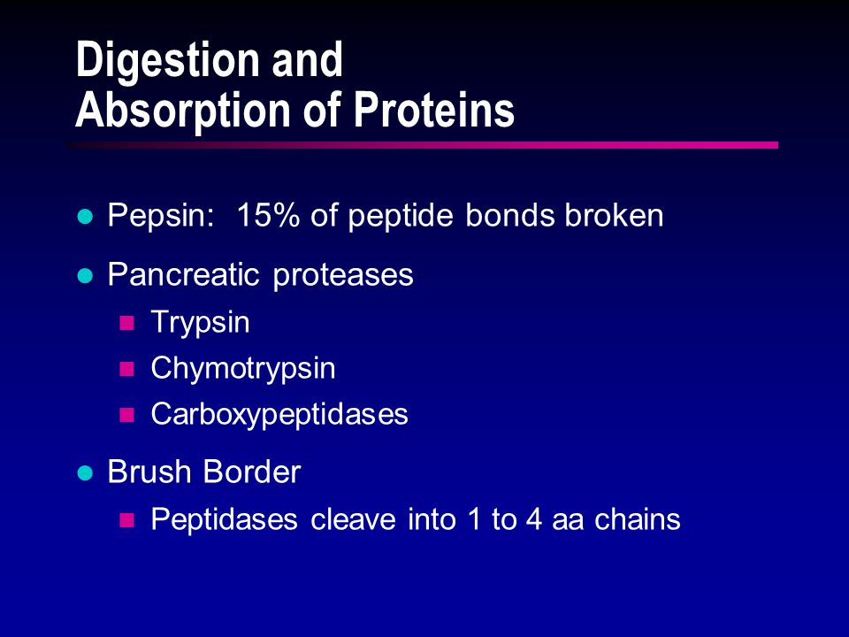 Digestion and Absorption of Proteins Pepsin: 15% of peptide bonds broken Pancreatic proteases Trypsin Chymotrypsin Carboxypeptidases Brush Border Peptidases cleave into 1 to 4 aa chains