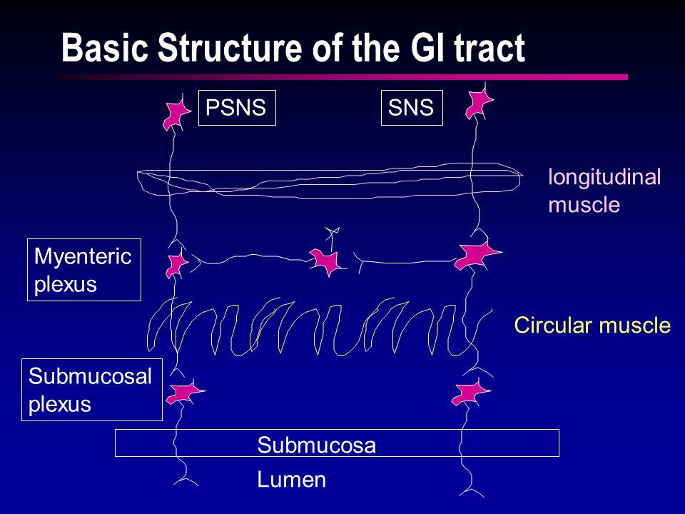 ENTERIC NERVOUS SYSTEM Myenteric Submucosal PSNS Pelvic nerves SNS Ach NE Smooth muscle Secretory Cells Endocrine Cells Blood Vessels Enteric Nervous System Influenced by ANS