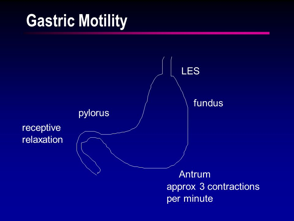 Gastric Motility LES fundus Antrum pylorus approx 3 contractions per minute receptive relaxation