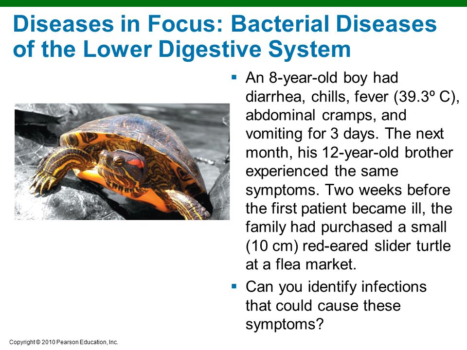 Copyright © 2010 Pearson Education, Inc. Diseases in Focus: Bacterial Diseases of the Lower Digestive System  An 8-year-old boy had diarrhea, chills,