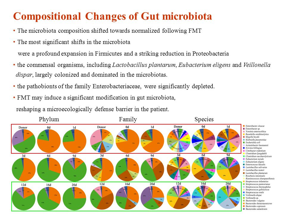 Compositional Changes of Gut microbiota The microbiota composition shifted towards normalized following FMT The most significant shifts in the microbiota were a profound expansion in Firmicutes and a striking reduction in Proteobacteria the commensal organisms, including Lactobacillus plantarum, Eubacterium eligens and Veillonella dispar, largely colonized and dominated in the microbiotas.