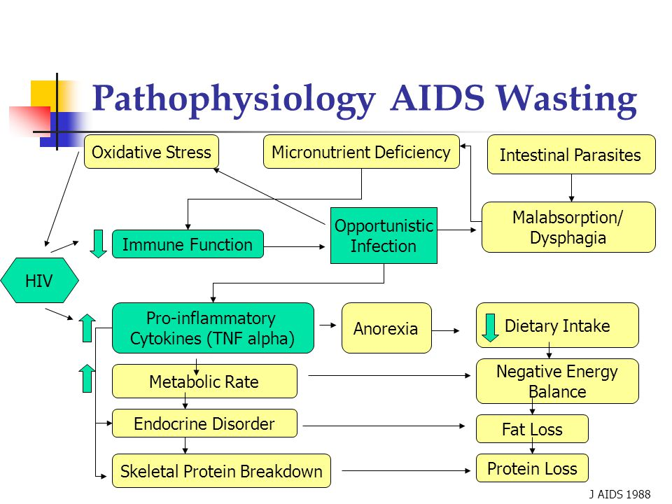 Pathophysiology AIDS Wasting Oxidative StressMicronutrient Deficiency Malabsorption/ Dysphagia Dietary Intake Negative Energy Balance Intestinal Parasites Protein Loss Fat Loss HIV Opportunistic Infection Immune Function Pro-inflammatory Cytokines (TNF alpha) Anorexia Metabolic Rate Endocrine Disorder Skeletal Protein Breakdown J AIDS 1988