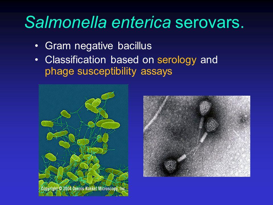 Salmonella enterica serovars.