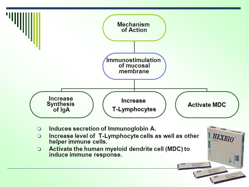  Induces secretion of Immunoglobin A.