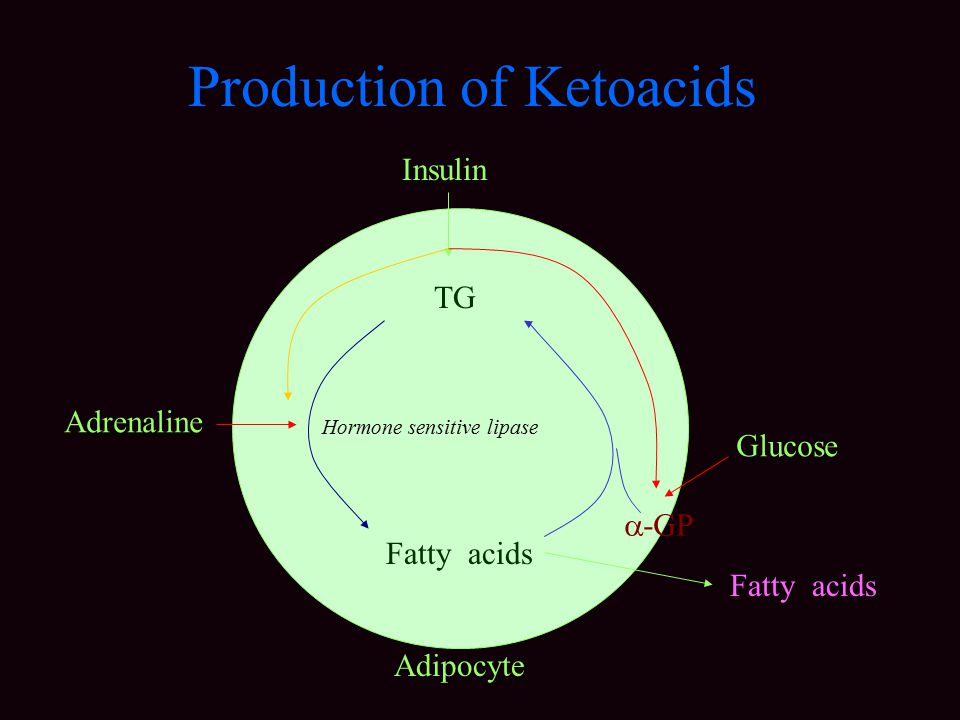 Production of Ketoacids TG Fatty acids Hormone sensitive lipase Fatty acids Adrenaline Insulin  -GP Glucose Adipocyte