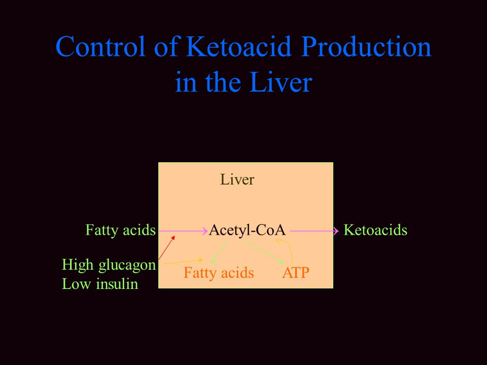 Control of Ketoacid Production in the Liver Fatty acids  Acetyl-CoA  Ketoacids Fatty acids ATP High glucagon Low insulin Liver