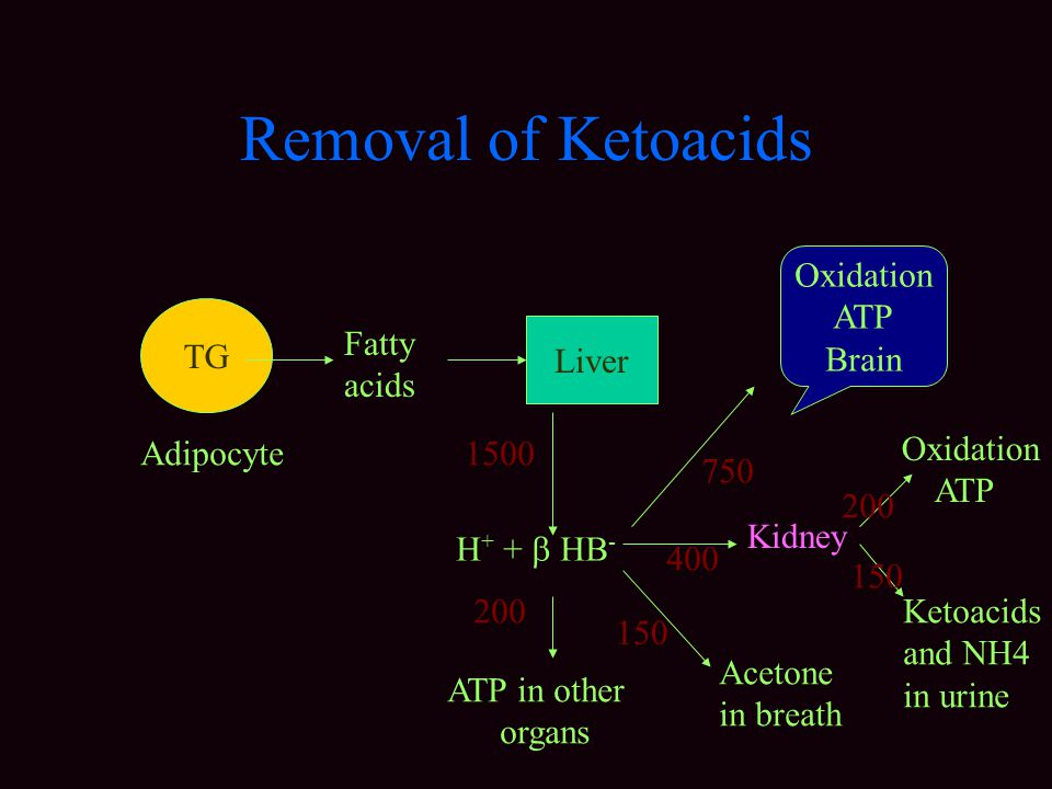 Removal of Ketoacids TG Fatty acids Liver H + +  HB - ATP in other organs Oxidation ATP Brain 750 400 Kidney Oxidation ATP Ketoacids and NH4 in urine 1500 150 Acetone in breath 200 Adipocyte 200 150