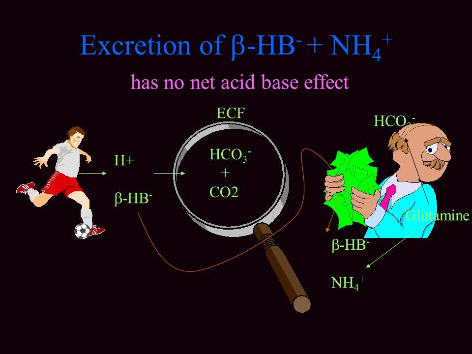 Excretion of  -HB - + NH 4 + has no net acid base effect H+  -HB - HCO 3 - + CO2 ECF  -HB - NH 4 + HCO 3 - Glutamine