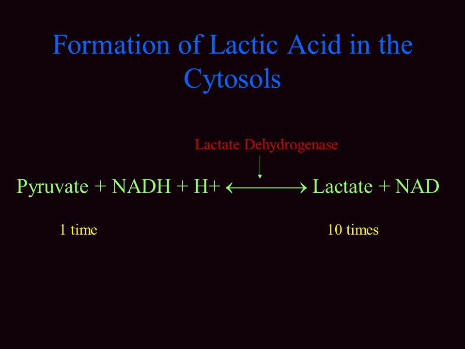 Formation of Lactic Acid in the Cytosols Pyruvate + NADH + H+  Lactate + NAD Lactate Dehydrogenase 1 time 10 times