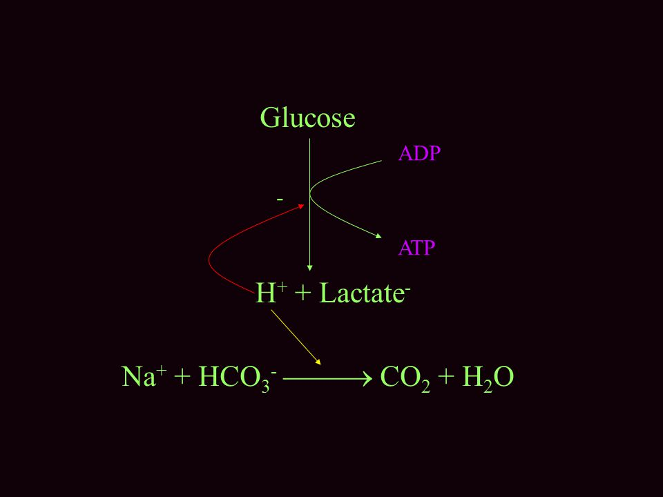 Glucose H + + Lactate - Na + + HCO 3 -  CO 2 + H 2 O - ADP ATP