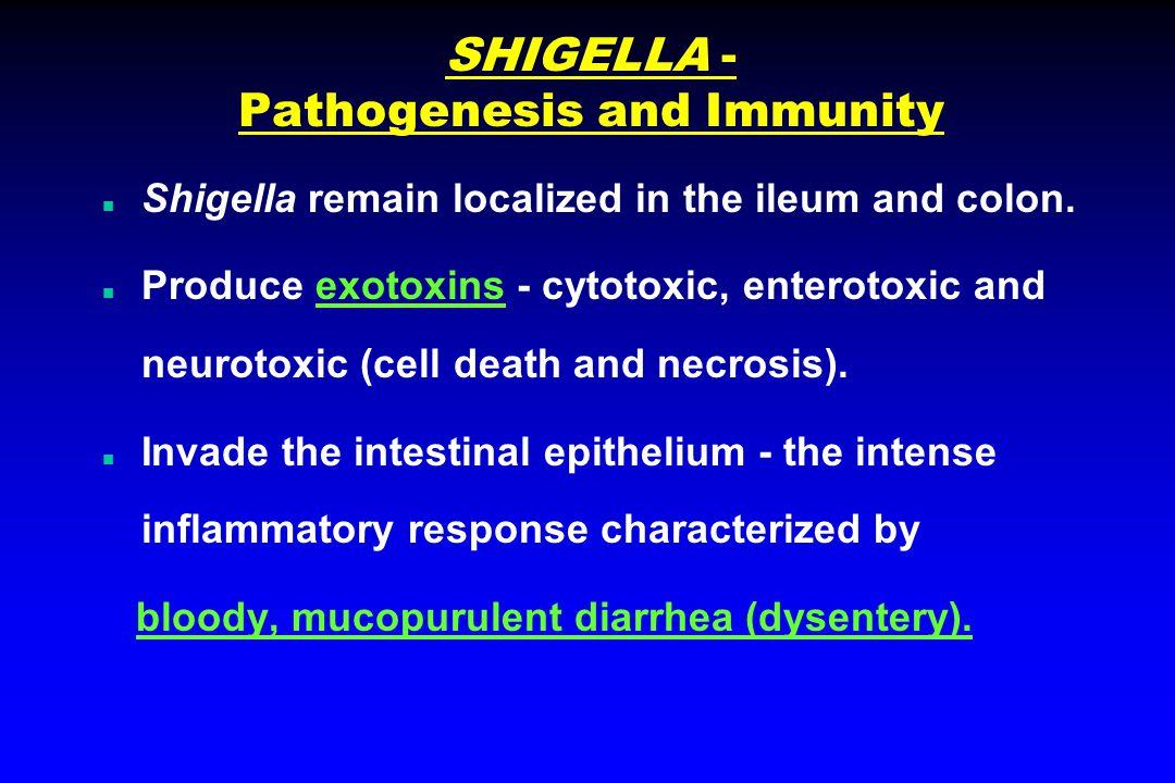 SHIGELLA - Pathogenesis and Immunity n Shigella remain localized in the ileum and colon.