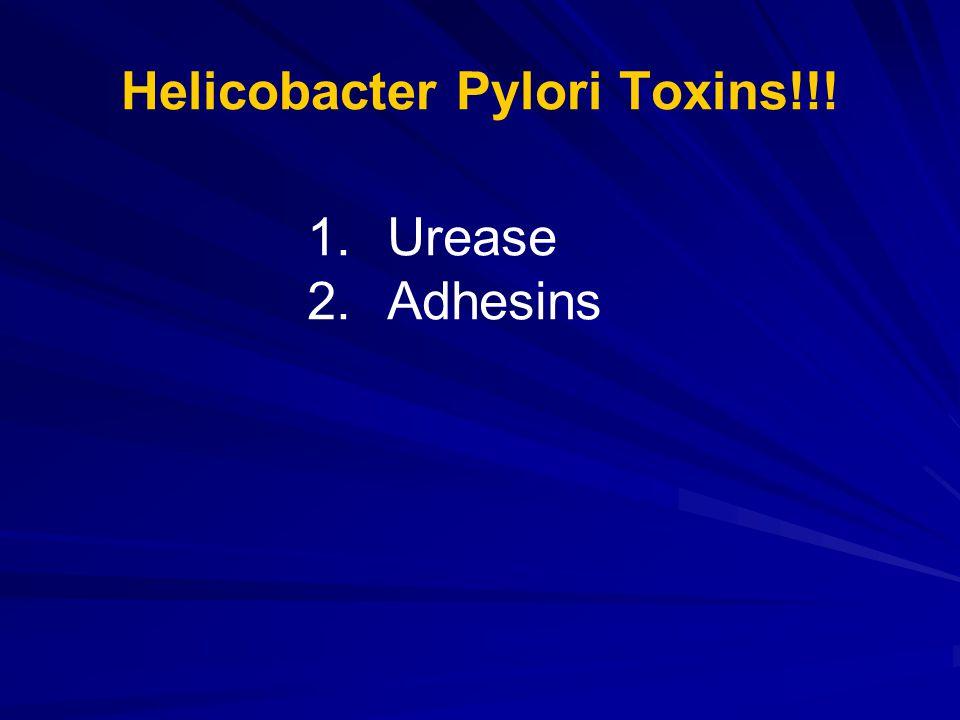 Helicobacter Pylori Toxins!!! 1.Urease 2.Adhesins
