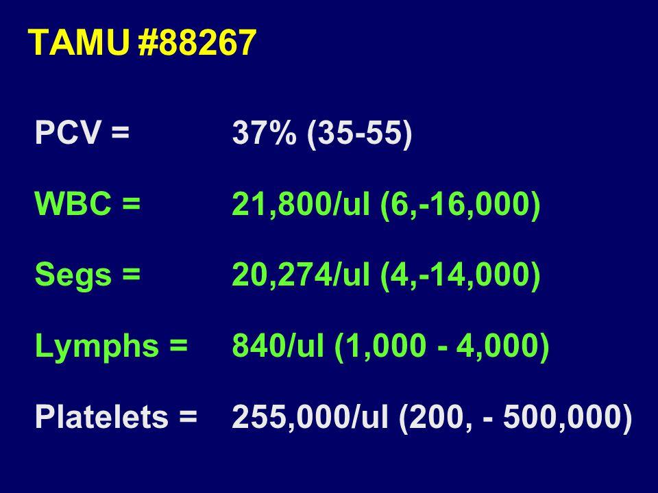 TAMU#88267 PCV =37% (35-55) WBC =21,800/ul (6,-16,000) Segs =20,274/ul (4,-14,000) Lymphs =840/ul (1,000 - 4,000) Platelets =255,000/ul (200, - 500,000)