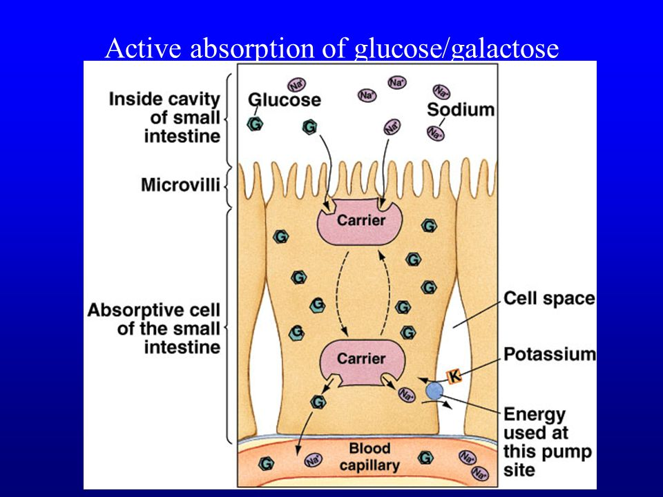 Active absorption of glucose/galactose