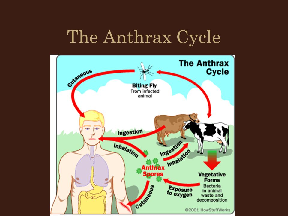 Vibrosis Intestinal form has little harmful effect Venereal form is more serious If the organism infects the uterus there will be some abortion in the herd Number of cows infected is usually small Cows do not become sterile and bulls are not affected.