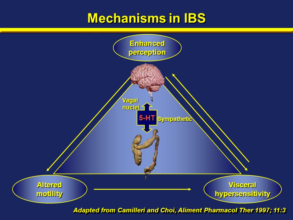 Mechanisms in IBS Adapted from Camilleri and Choi, Aliment Pharmacol Ther 1997; 11:3 Enhanced perception Sympathetic Vagalnuclei 5-HT Altered motility Visceral hypersensitivity