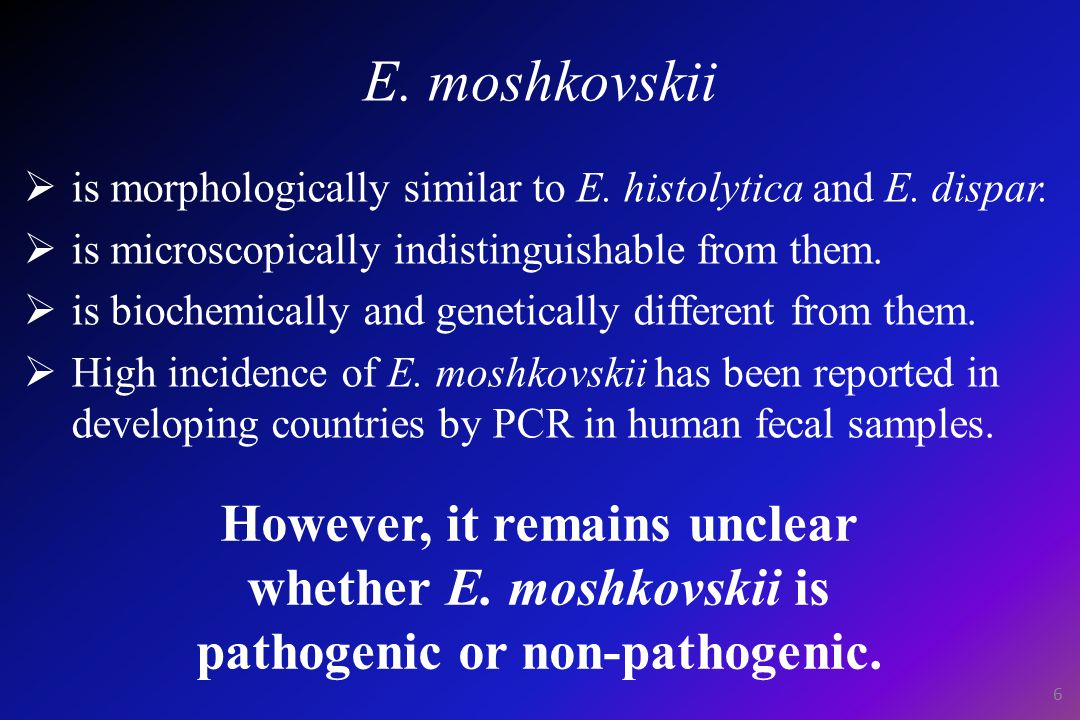 E. moshkovskii  is morphologically similar to E.