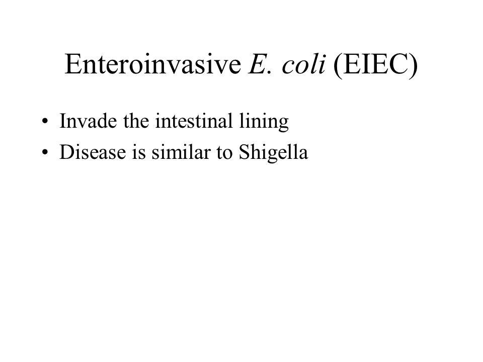 Enteroinvasive E. coli (EIEC) Invade the intestinal lining Disease is similar to Shigella