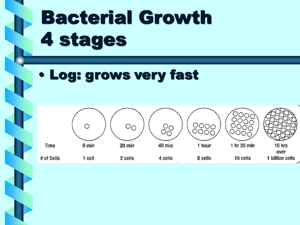 Bacterial Growth 4 stages Log: grows very fastLog: grows very fast