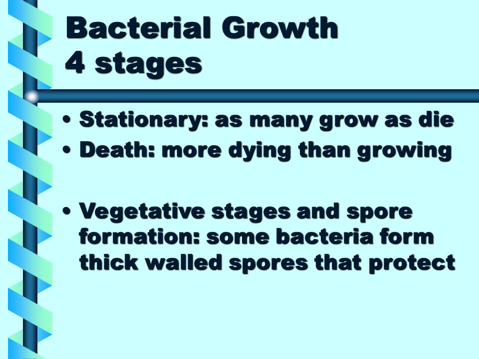 Bacterial Growth 4 stages Stationary: as many grow as dieStationary: as many grow as die Death: more dying than growingDeath: more dying than growing Vegetative stages and spore formation: some bacteria form thick walled spores that protectVegetative stages and spore formation: some bacteria form thick walled spores that protect