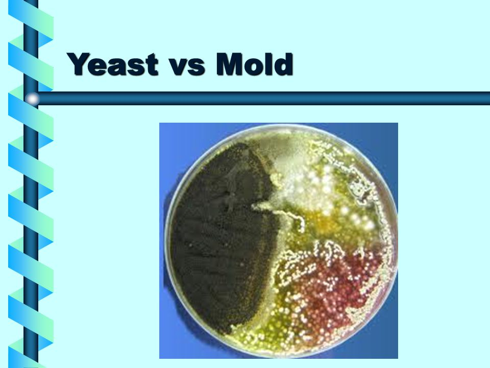 Yeast vs Mold