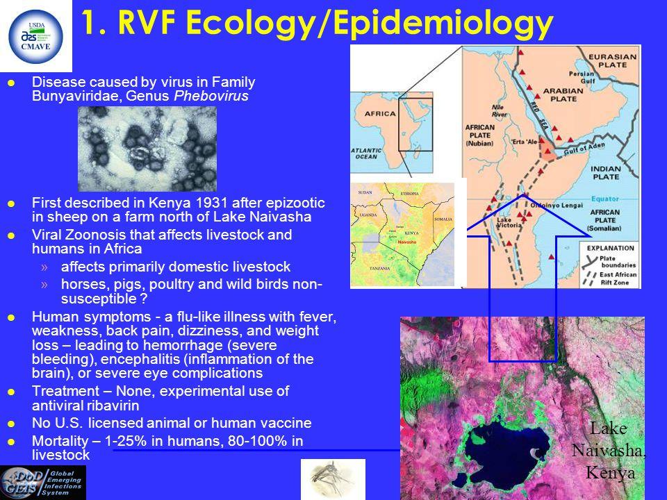 1. RVF Ecology/Epidemiology l Disease caused by virus in Family Bunyaviridae, Genus Phebovirus l First described in Kenya 1931 after epizootic in shee