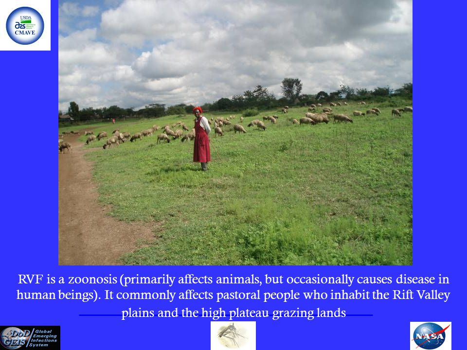 RVF is a zoonosis (primarily affects animals, but occasionally causes disease in human beings). It commonly affects pastoral people who inhabit the Ri