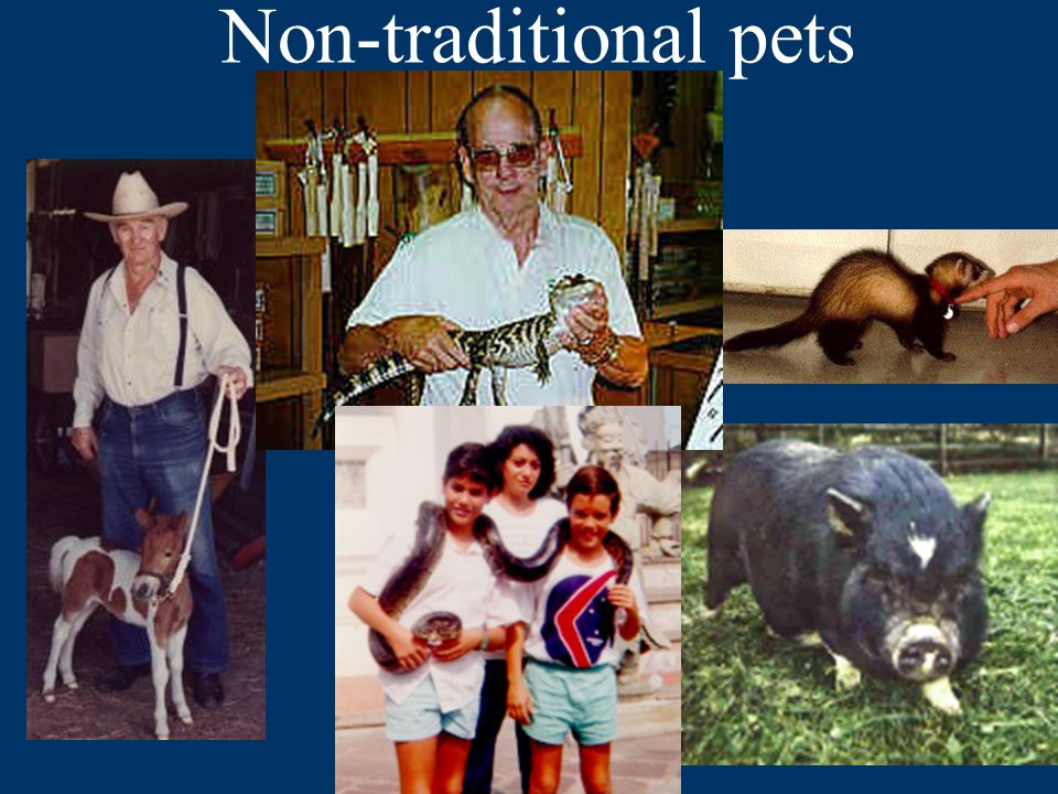 Non-traditional pets