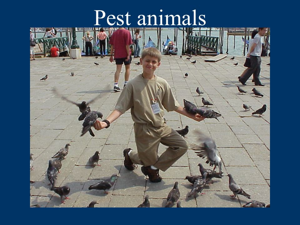 Pest animals