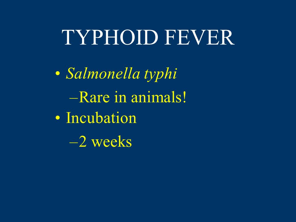 TYPHOID FEVER Salmonella typhi –Rare in animals! Incubation –2 weeks