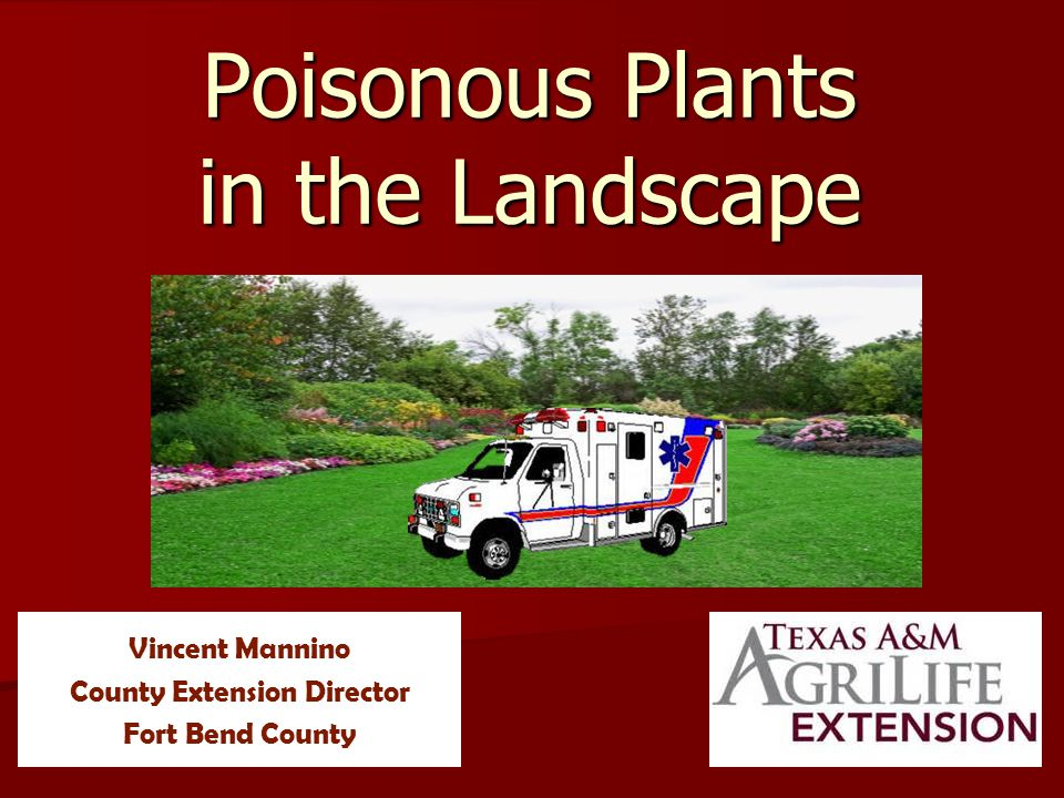 Poisonous Plants in the Landscape Purpose To become familiar with some of your poisonous landscape plants To become familiar with some of your poisonous landscape plants To determine what parts of the plant is poisonous To determine what parts of the plant is poisonous To review the types of poisonings To review the types of poisonings