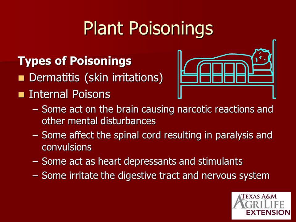 Black Locust Toxic Plant Part Toxic Plant Part –Bark –Seeds Symptoms Symptoms –Nausea –Weakness –depression Used as a flowering specimen tree