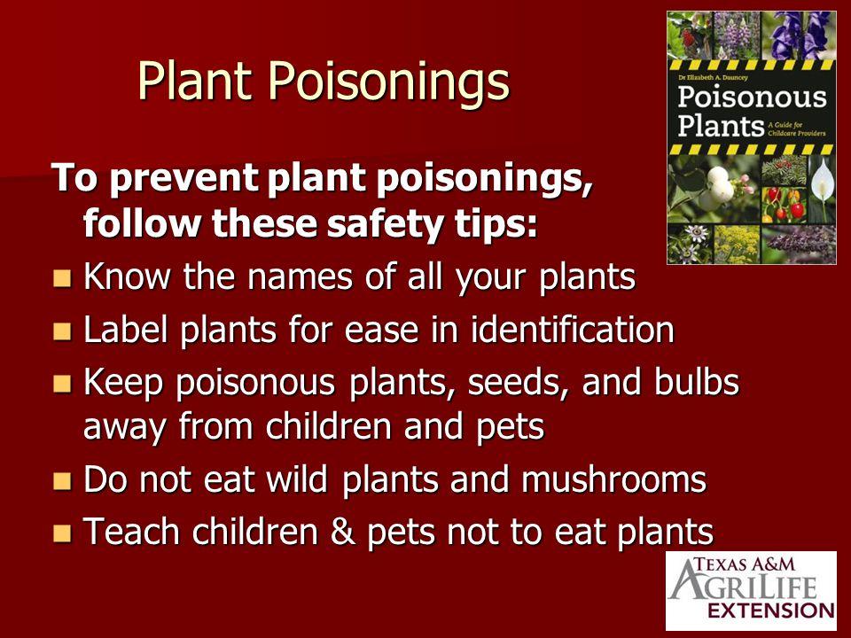 The Common Poisonous Plants in the Landscape