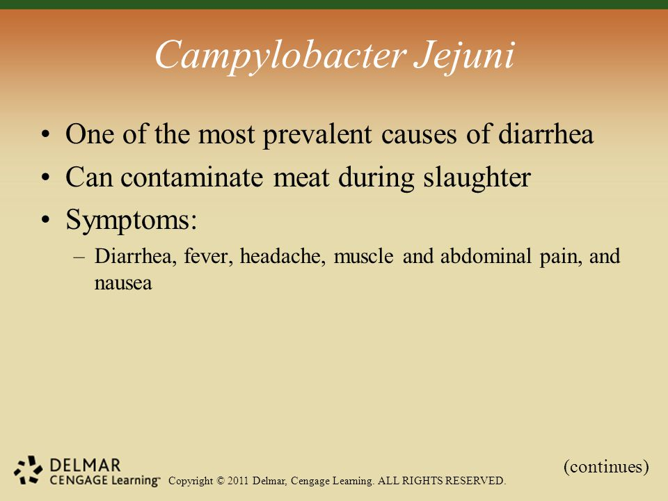 Copyright © 2011 Delmar, Cengage Learning. ALL RIGHTS RESERVED. Campylobacter Jejuni One of the most prevalent causes of diarrhea Can contaminate meat