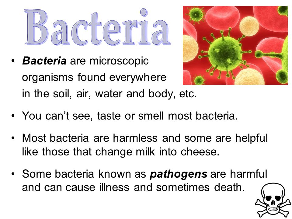 Bacteria are microscopic organisms found everywhere in the soil, air, water and body, etc.