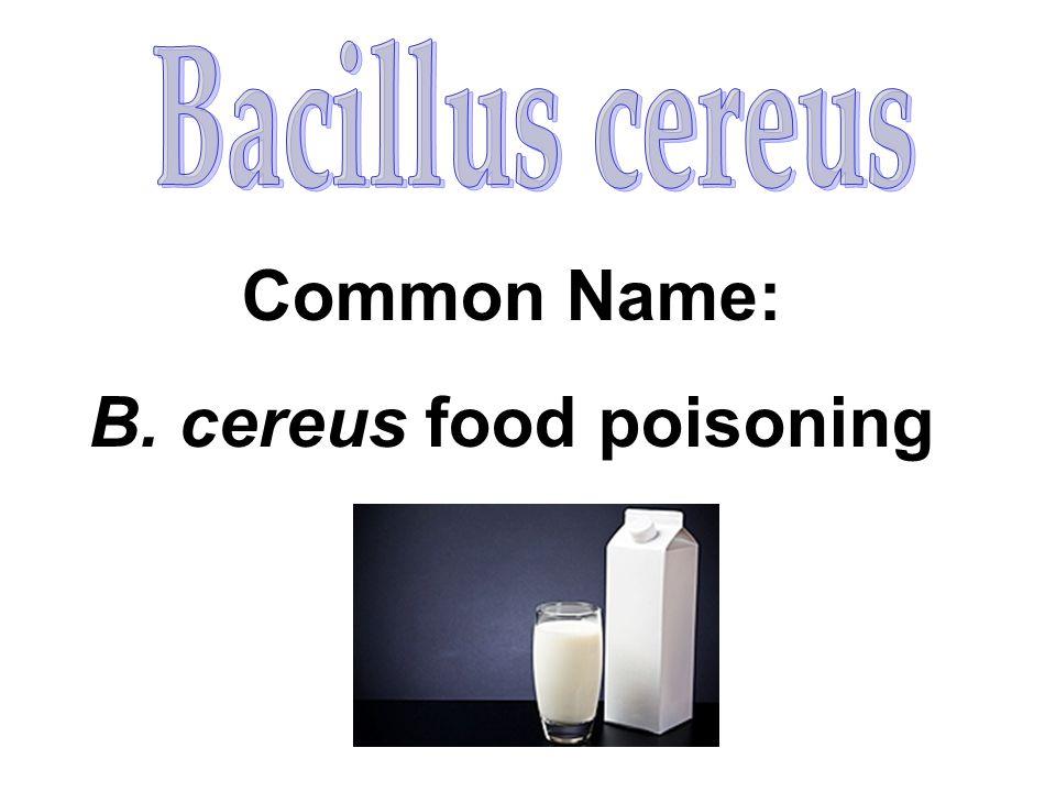 Common Name: B. cereus food poisoning