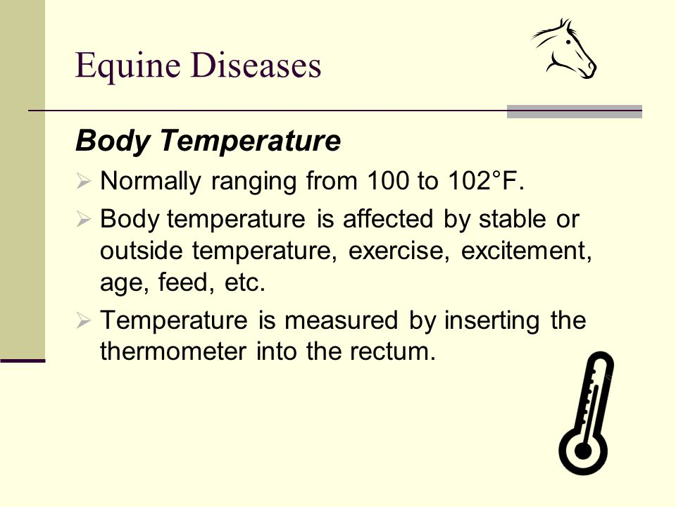 Equine Diseases Body Temperature  Normally ranging from 100 to 102°F.