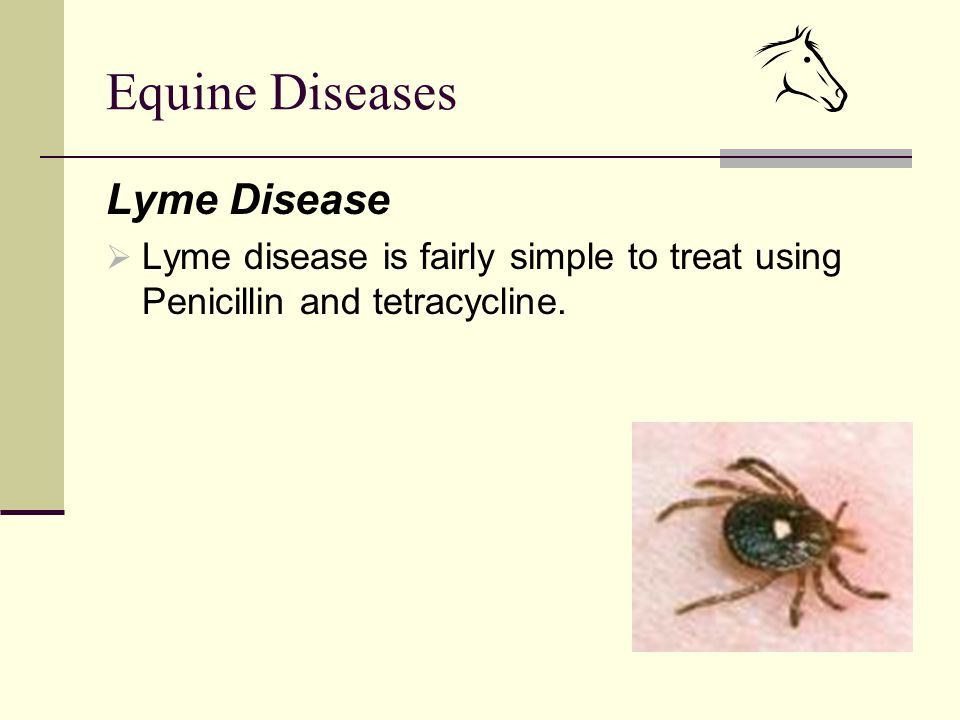 Equine Diseases Lyme Disease  Lyme disease is fairly simple to treat using Penicillin and tetracycline.