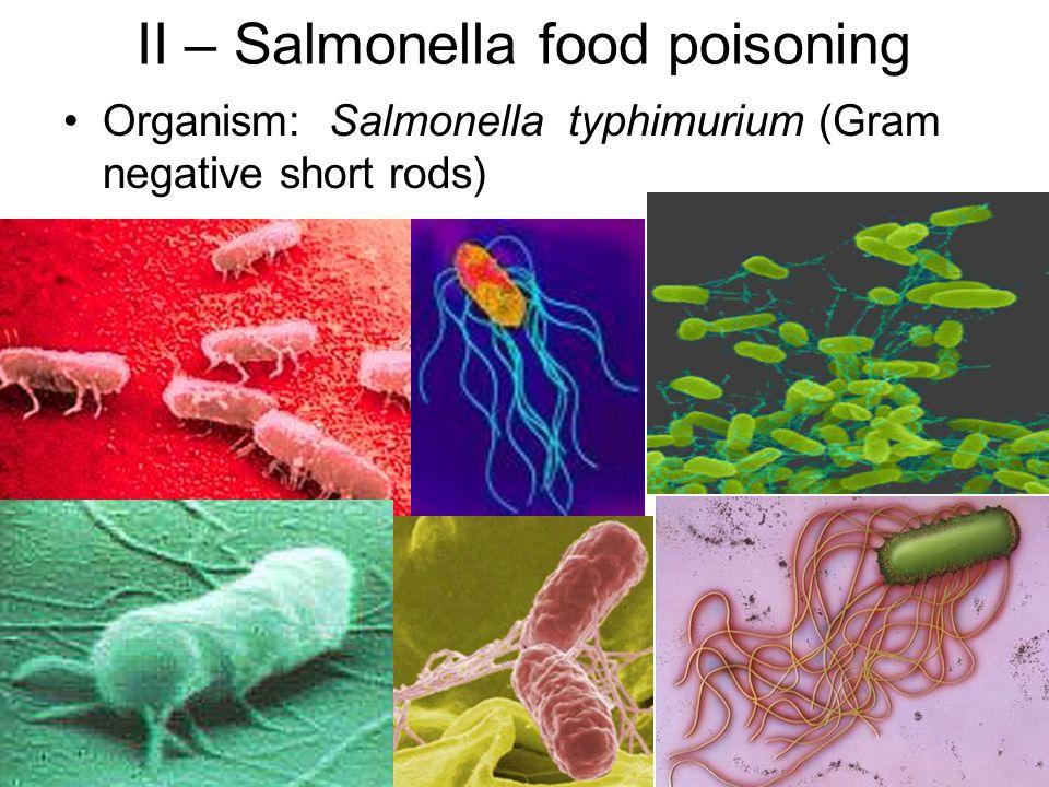 II – Salmonella food poisoning Organism: Salmonella typhimurium (Gram negative short rods)