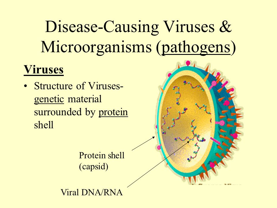 Disease-Causing Viruses and Microorganisms