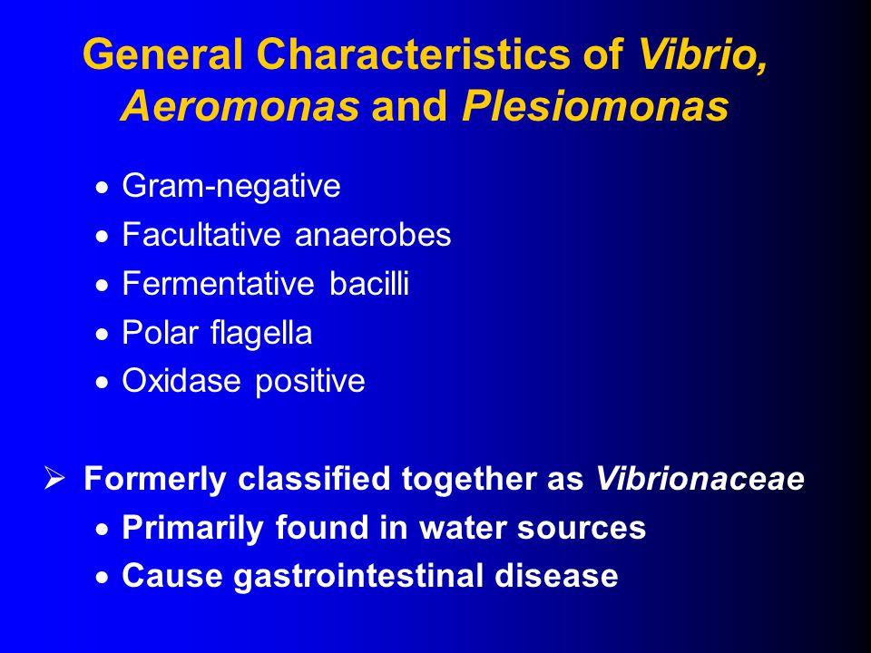  Gram-negative  Facultative anaerobes  Fermentative bacilli  Polar flagella  Oxidase positive  Formerly classified together as Vibrionaceae  Primarily found in water sources  Cause gastrointestinal disease General Characteristics of Vibrio, Aeromonas and Plesiomonas